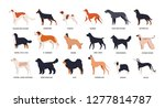 bundle of funny cute dogs of... | Shutterstock .eps vector #1277814787