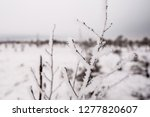 frost and ice crystal covered... | Shutterstock . vector #1277820607