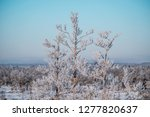 frost and ice crystal covered... | Shutterstock . vector #1277820637