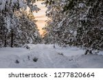 frost and ice crystal covered... | Shutterstock . vector #1277820664
