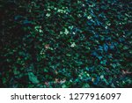 leaves grow on a stone wall   Shutterstock . vector #1277916097