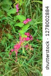 a beautiful grass with...   Shutterstock . vector #1278002884