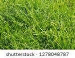 green grass background texture | Shutterstock . vector #1278048787