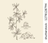 myrrh  plant and resin of myrrh.... | Shutterstock .eps vector #1278128794