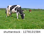 cow on a summer pasture | Shutterstock . vector #1278131584