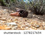 an old rusted metal can resting ... | Shutterstock . vector #1278217654