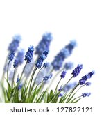 Stock photo spring blue flowers isolated on white 127822121