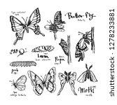 bug illustration   hand drawn... | Shutterstock .eps vector #1278233881