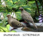 A Pair Of Two Turtle Doves Or...