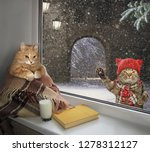 the cat under the plaid sits on ... | Shutterstock . vector #1278312127