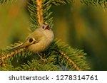 the goldcrest  regulus regulus  ...   Shutterstock . vector #1278314761