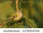 the goldcrest  regulus regulus  ...   Shutterstock . vector #1278314764