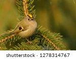 the goldcrest  regulus regulus  ...   Shutterstock . vector #1278314767