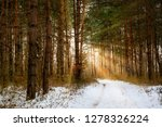 road in winter forest and... | Shutterstock . vector #1278326224