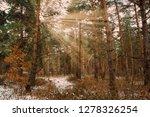 dreamy landscape with winter... | Shutterstock . vector #1278326254