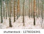 dreamy landscape with winter... | Shutterstock . vector #1278326341