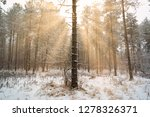 dreamy landscape with winter... | Shutterstock . vector #1278326371