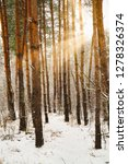 dreamy landscape with winter... | Shutterstock . vector #1278326374