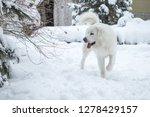 young tatra shepherd dog in... | Shutterstock . vector #1278429157