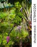 banana plant in munduk  bali ... | Shutterstock . vector #1278442204