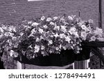 pots with flowers in bloom on a ... | Shutterstock . vector #1278494491