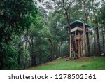 Treehouse In The Jungle