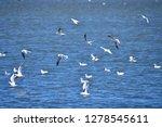 the birds of the sea   Shutterstock . vector #1278545611