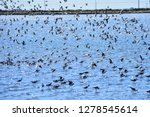 the birds of the sea   Shutterstock . vector #1278545614