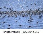 the birds of the sea   Shutterstock . vector #1278545617