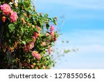 pink flower and blue sky copy... | Shutterstock . vector #1278550561