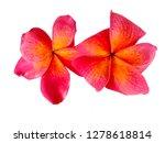 plumeria flower isolated on... | Shutterstock . vector #1278618814