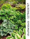 brunnera jack frost planted... | Shutterstock . vector #1278626767