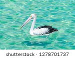 a pelican at the beach in blue... | Shutterstock . vector #1278701737