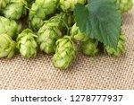 fresh green hop on a wooden... | Shutterstock . vector #1278777937