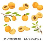 flat vector set of apricot... | Shutterstock .eps vector #1278803431