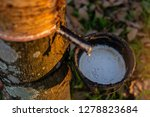 gardener tapping latex rubber... | Shutterstock . vector #1278823684