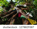 sacred old tree entwined with... | Shutterstock . vector #1278829387