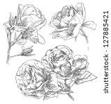 hand drawing flower | Shutterstock .eps vector #127885421