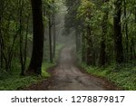 road through forest with fog | Shutterstock . vector #1278879817