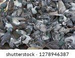 pigeons flocked together on...   Shutterstock . vector #1278946387
