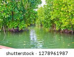the trip to the red mangroves... | Shutterstock . vector #1278961987