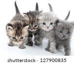 Stock photo group of four kittens walking together 127900835