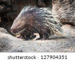 porcupine | Shutterstock . vector #127904351