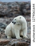 canada  nunavut territory ... | Shutterstock . vector #1279061644