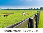 Green Pastures Of  Horse Farms...