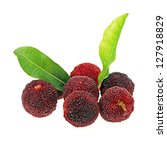 arbutus on white background | Shutterstock . vector #127918829