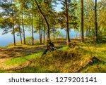 sunny summer morning outside... | Shutterstock . vector #1279201141