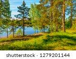 sunny summer morning outside... | Shutterstock . vector #1279201144