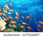 underwater world in deep water... | Shutterstock . vector #1279236097