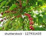 coffee   coffee tree with ripe ... | Shutterstock . vector #127931435